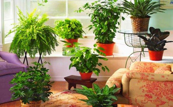 Как влияют комнатные растения