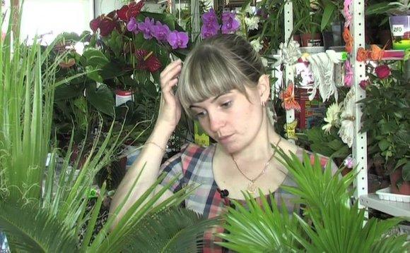 Комнатные пальмы -- джунгли в