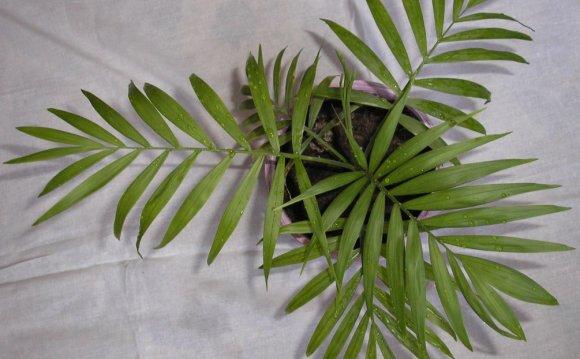 Комнатные растения, которые