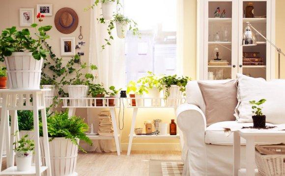 Комнатные растения: