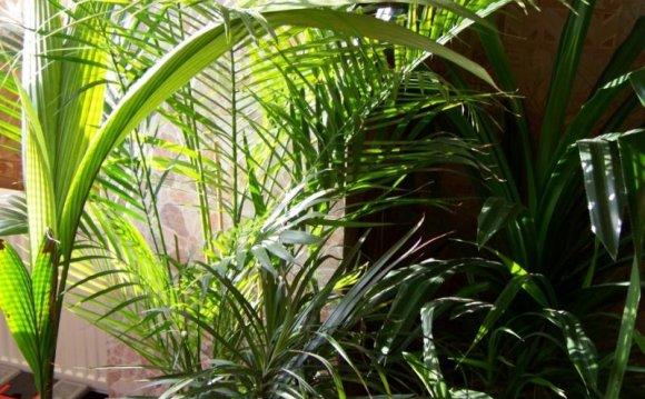 комнатные растения, растения