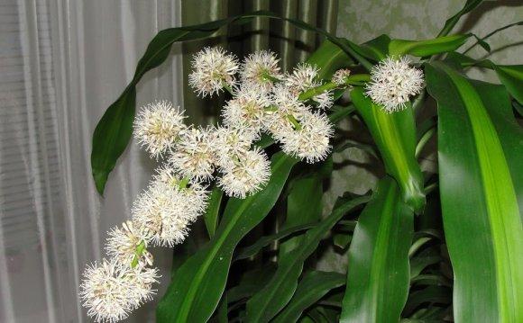 Nadia Gaynutdinova: Как цветет