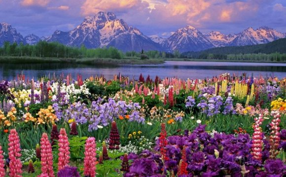 народные приметы цветы