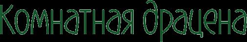 Комнатная драцена